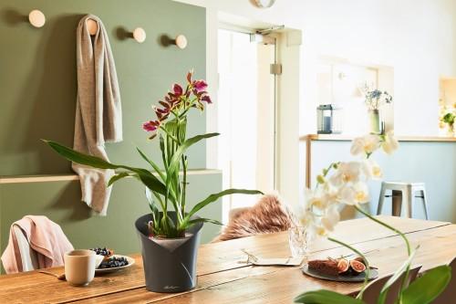 Doniczka Na Storczyki Orchidea Lechuza