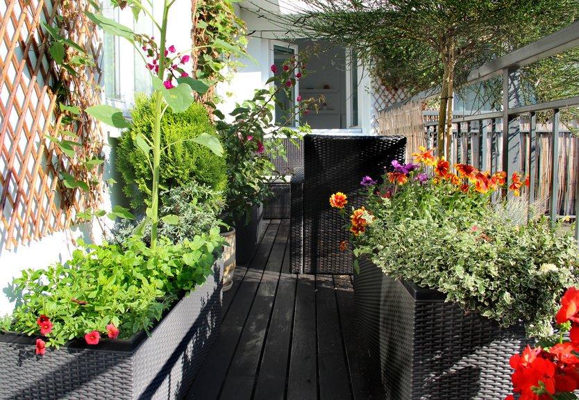 Rośliny I Donice Na Balkon Ogrodolandiapl