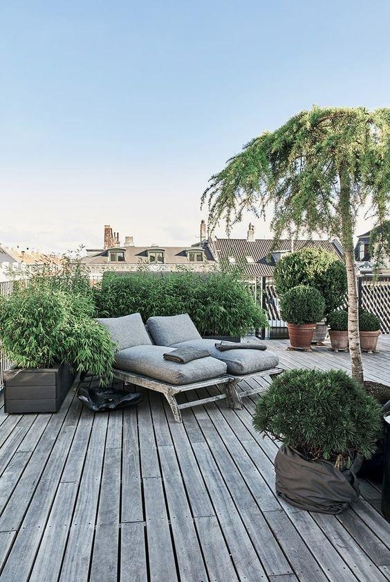 Drzewo Na Balkon Czy To Możliwe Ogrodolandiapl