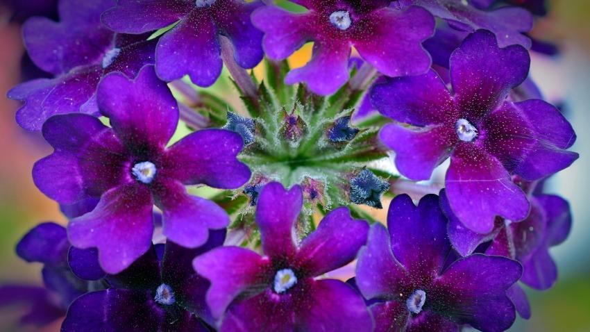 Jakie Kwiaty Na Balkon Ogrodolandiapl
