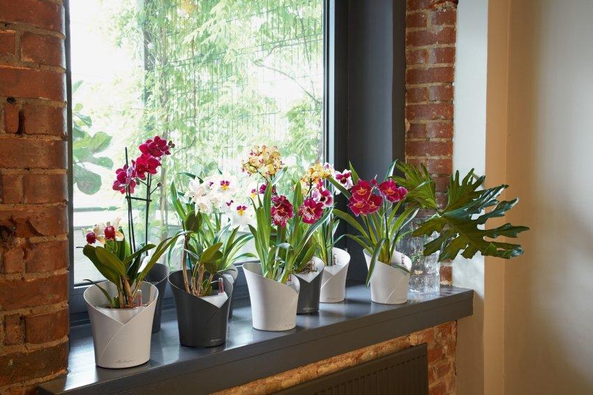 Przesadzanie Na Wiosnę Kwiatów Doniczkowych Kiedy I Jak