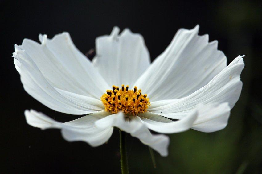 Bialy Ogrod Rosliny Ogrodowe O Bialych Kwiatach Zielony Ogrodek
