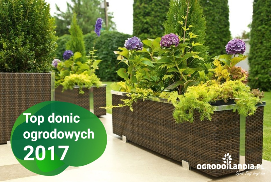 Top donic ogrodowych 2017